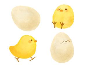 卵 賞味期限 生