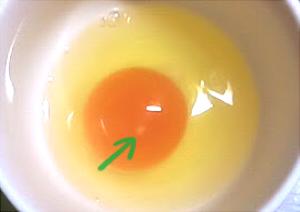 卵 ひよこ どこの部分