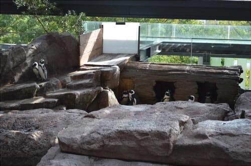 京都水族館 ケープペンギン お土産