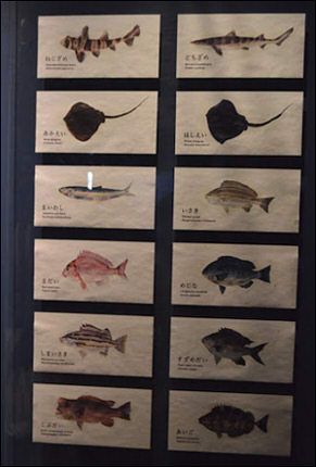 京都水族館 イラスト お土産