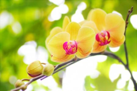 胡蝶蘭 時期 花言葉