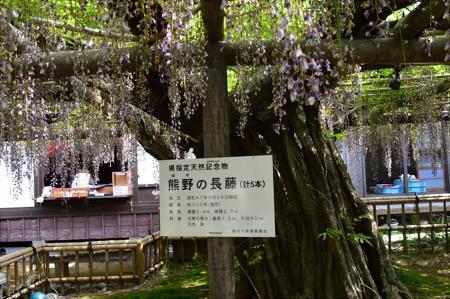 藤の花 時期