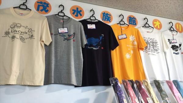 加茂水族館 お土産 クラゲ