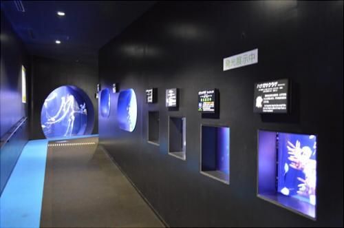 加茂水族館 クラゲ 種類