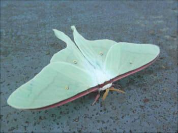 蝶と蛾の違い